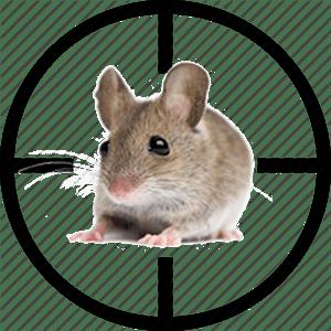 anti-souris