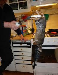 kill_rat5