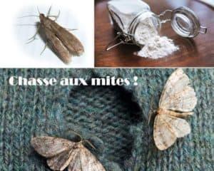 lutter contre les mites