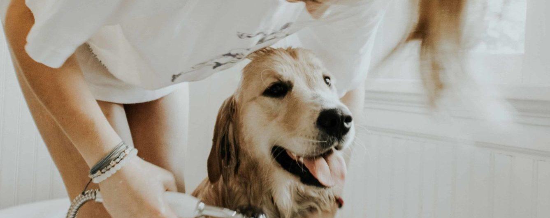 Se débarrasser des puces des chiens