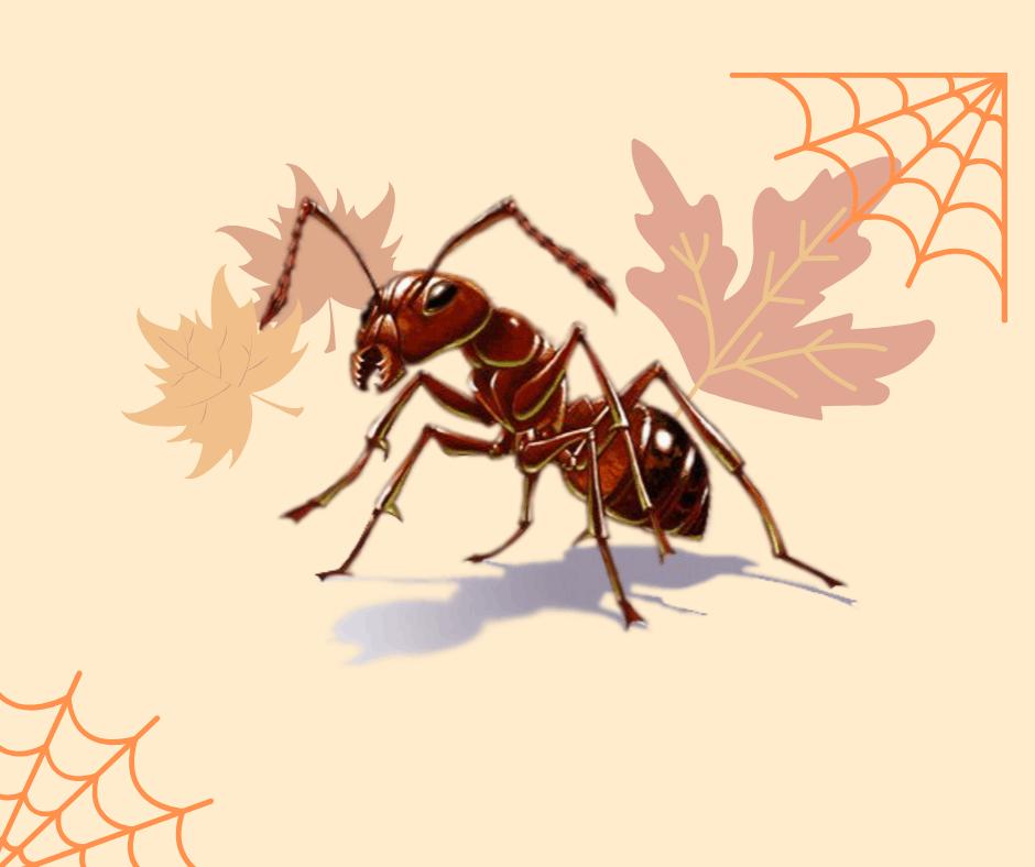 Traitement fourmis à Lyon